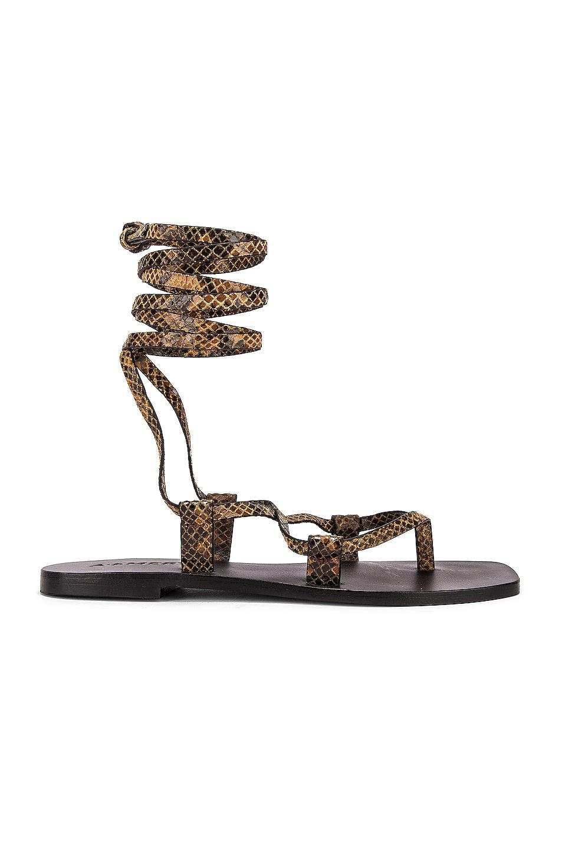 Image 1 of A.EMERY Finnley Sandal in Caramel Snake