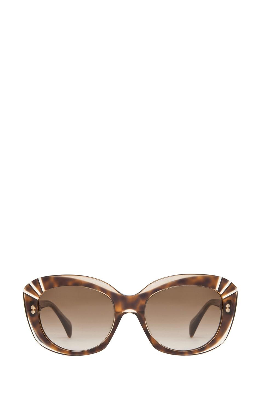 Image 1 of Alexander McQueen 4214 Sunglasses in Champagne Havana & Brown Gradient