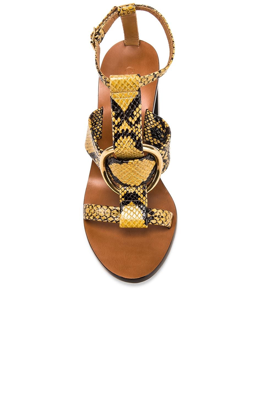 Image 4 of Chloe Circle Sandals in September Sun