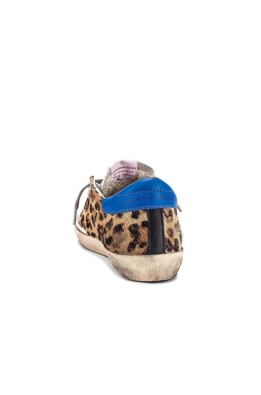 Image 3 of Golden Goose Superstar Sneaker in Snow Leopard & Royal