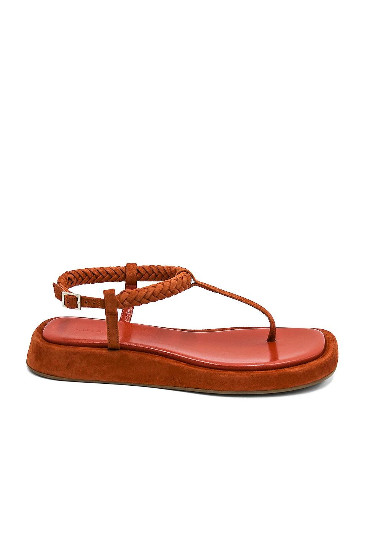 Image 1 of GIA/RHW Flat Thong Suede Sandal in Burnt Orange