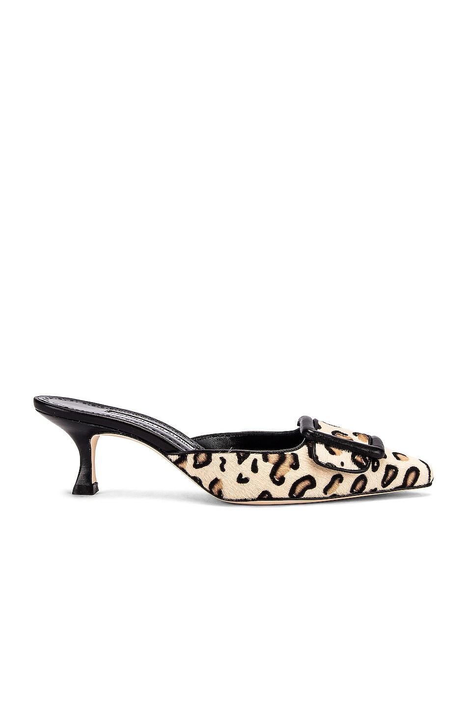 Image 1 of Manolo Blahnik Maysale 50 Heel in Leopard