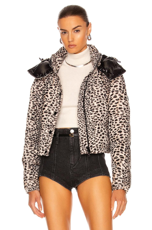 Image 1 of Moncler Avoine Jacket in Leopard Velvet