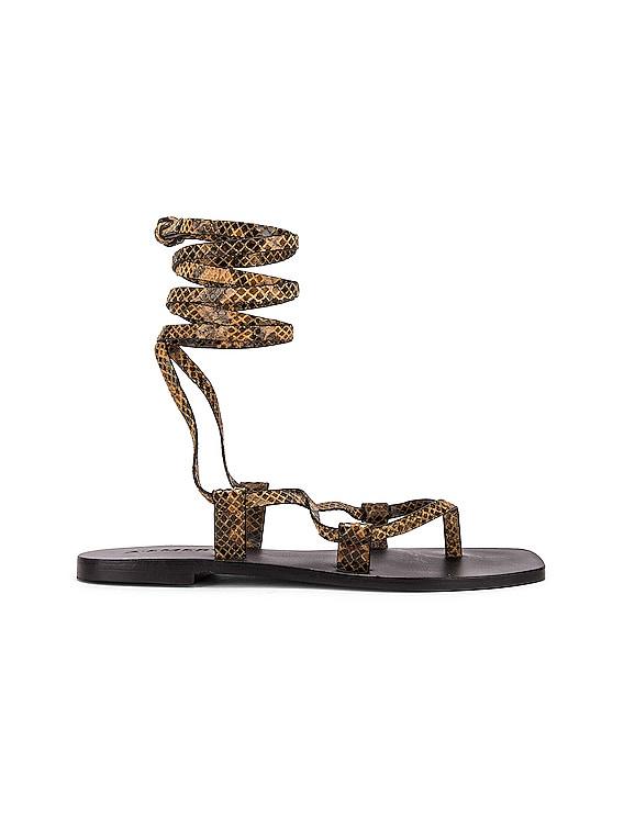 Finnley Sandal in Caramel Snake