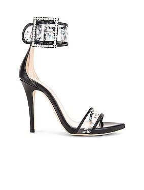 SW Heels